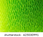 abstract blur close up shot of... | Shutterstock . vector #625030991
