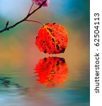 Red Aspen Leaf Reflected In A...