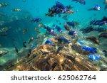 underwater world of lake malawi ... | Shutterstock . vector #625062764