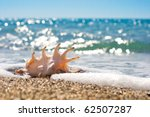 Seashell In Surf And Sand Of...
