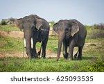 elephants in their habitat in... | Shutterstock . vector #625093535