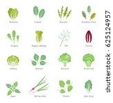 salad ingredients. leafy... | Shutterstock .eps vector #625124957