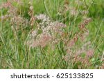 Blooming Grass Flowers. ...