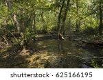 swamp in letea forest  after... | Shutterstock . vector #625166195