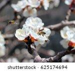honey bee on apricot flowers | Shutterstock . vector #625174694