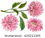 watercolor set of dahlia... | Shutterstock . vector #625211345