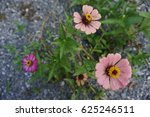Small photo of soft pink flower
