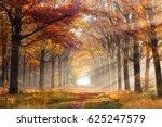 sun shining through a forest on ... | Shutterstock . vector #625247579