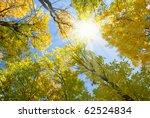 Sun Shining Through Autumn...