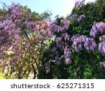 spring flowers  wisteria | Shutterstock . vector #625271315