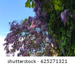 spring flowers  wisteria | Shutterstock . vector #625271321