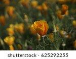 orange flower in park