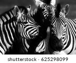 close up of a playful group of... | Shutterstock . vector #625298099