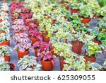 Shop Of Plants And Flowers For...