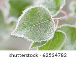 Crystals Of Hoar Frost On Leaves