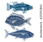 set of fishes  different... | Shutterstock . vector #625351841