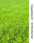 Lush Green Lawn In Close Up Fo...