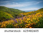 california poppies and... | Shutterstock . vector #625482605