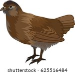 vector quail illustration | Shutterstock .eps vector #625516484