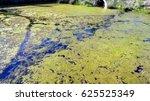 Small photo of Algae Bloom or Algal Bloom Caused by Fertilizer Run Off