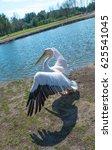 great white pelicans | Shutterstock . vector #625541045