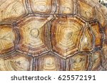 Turtle Wall Texture Wall Paper...