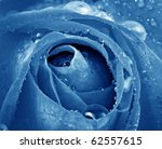 Blue Rose With Dew Drops Macro