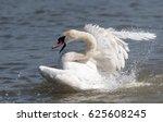 angry wild swan splashing  ... | Shutterstock . vector #625608245