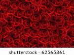 Stock photo background with many red roses 62565361