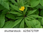 Ranunculus Acris Is A Species...