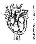 pen sketch of the human heart... | Shutterstock .eps vector #625683791