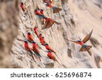 northern carmine bee eater in... | Shutterstock . vector #625696874