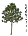 pine tree isolated with... | Shutterstock . vector #625748801