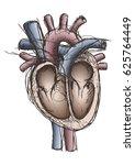 pen sketch of the human heart... | Shutterstock .eps vector #625764449