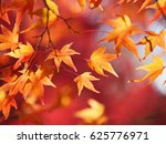 Red Leaves Maple In Autumn At...