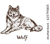 gray wolf  timber wolf or... | Shutterstock .eps vector #625795805
