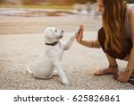 Stock photo labrador puppy and young woman give a high five 625826861