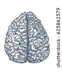 pen sketch of a human brain.... | Shutterstock .eps vector #625862579