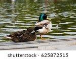 Sleeping Mallard Duck Pair On...