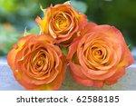 Beautiful Orange Roses Lying O...