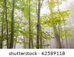 early autumn in the woods - stock photo