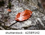lonely autumn leaf on a rock - stock photo
