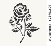 rose etching. vector black hand ... | Shutterstock .eps vector #625901609