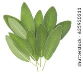 sage leaves isolated on white... | Shutterstock . vector #625920311