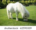 An Image Of A Single White Pony