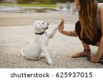 labrador puppy and young woman...   Shutterstock . vector #625937015