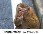 monkeys on monke  hill thailand ... | Shutterstock . vector #625960841