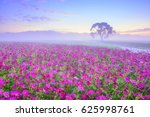 landscape of cosmos fields with ... | Shutterstock . vector #625998761