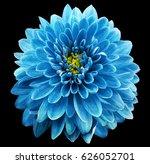 blue flower chrysanthemum on...   Shutterstock . vector #626052701