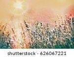 white butterfly on lavender... | Shutterstock . vector #626067221